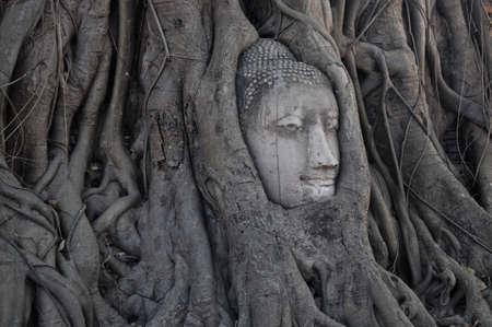 cabeza de buda: Cabeza de Buda en el interior del �rbol en Ayudhaya Tailandia Foto de archivo