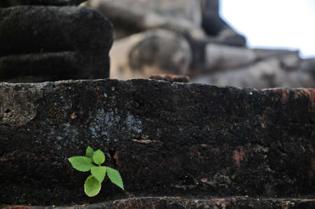 persist: New plant tree grows from brick ruins