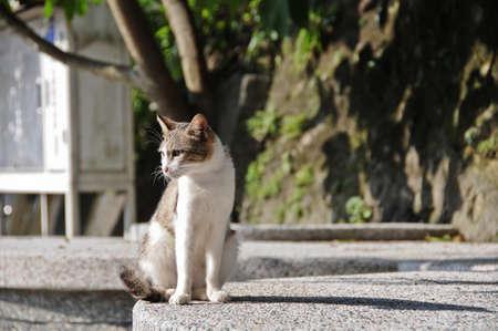 look down: White brown cat look down