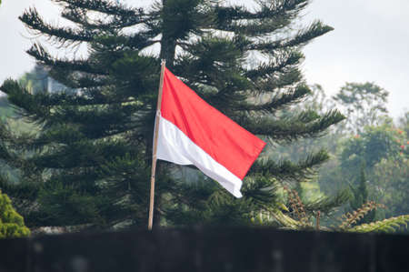 Red and White Indonesian flag in jungle