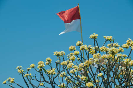 Indonesian national flag flying on yellow flowers tree and blue sky