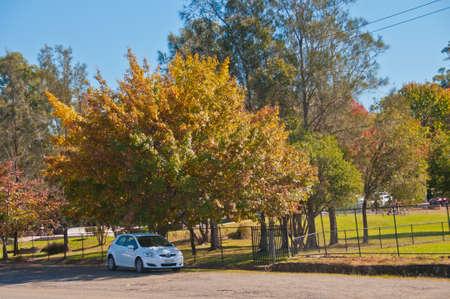 SYDNEY, AUSTRALIA - MAY 6, 2018: White Toyota Yaris eco car parks under the colourful foliage maple tree in Blue Mountain Sydney Australia
