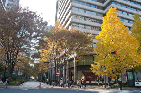 TOKYO, JAPAN - DECEMBER 1, 2018: Long road alley shopping street with Gingko yellow foliage leaves trees in late Autumn. There are many people walk on the street. 報道画像