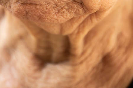 Senior womans wrinkled chin, Close up & Macro shot, Selective focus, Body part, Healthcare concept