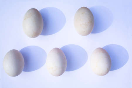 Five duck eggs on white background Stok Fotoğraf