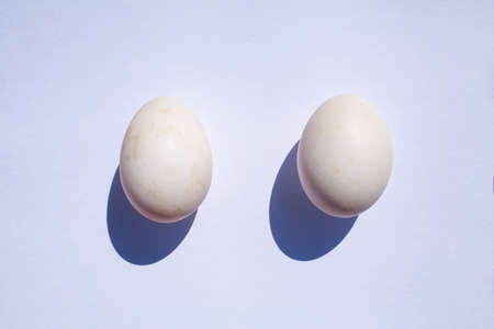 Two duck eggs on white background Stok Fotoğraf - 129306999