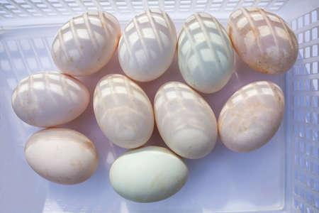 Ten duck eggs in white plastic basket on white background, Light & Shadow concept Stok Fotoğraf - 129307070