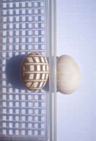 Two duck eggs in white plastic basket on white background, Light & Shadow concept Stok Fotoğraf