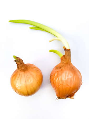 Two onions growing isolated on white background
