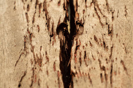 Putty wood on old wooden plank texture background, Close up & Macro shot, Selective focus