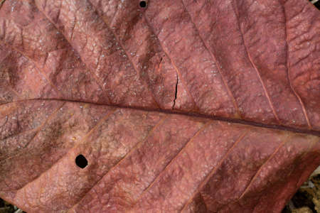 Santol leaf, Close up & Macro shot, Selective focus, Abstract background