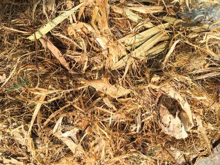 Squirrels nest fallen on cement ground