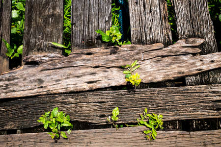 Little plant growing up on wood background