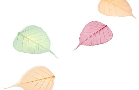 Autumn falls background template. Skeletonized colorful leaves on white Фото со стока