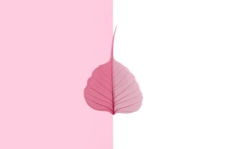 Autumn falls background template. Skeletonized leaf on white and pink. Pastel colors flat lay minimal composition.