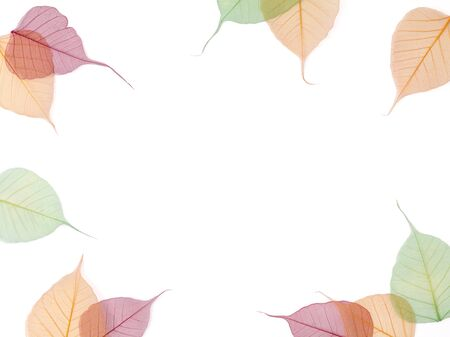 Autumn falls background template. Skeletonized colorful leaves on white. Pastel colors flat lay composition.