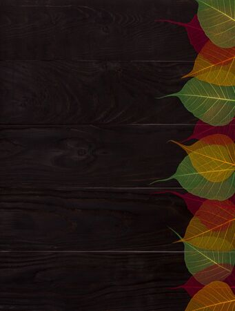 Autumn falls background template. Skeletonized colorful leaves on dark wooden table. Pastel colors flat lay composition. Фото со стока