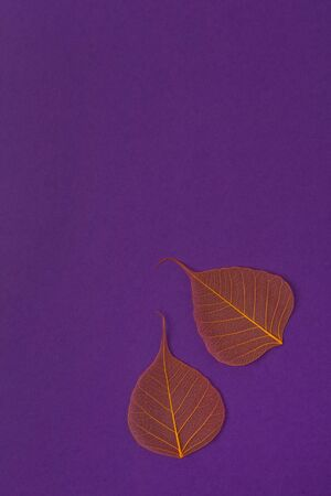 Orange skeleton leaves at purple backgound. Autumn fall template. Top view space for text
