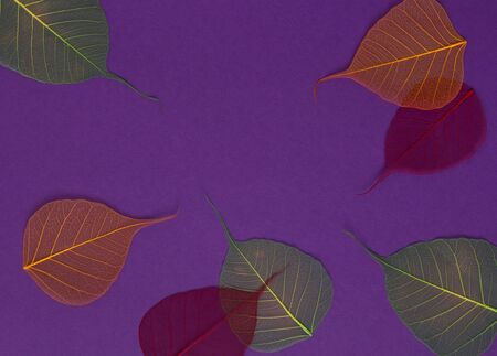 Colorful skeleton leaves at purple backgound. Autumn fall template. Top view space for text