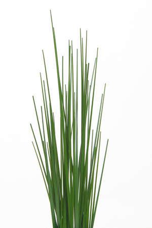 Grass on white background Stock Photo - 12170901