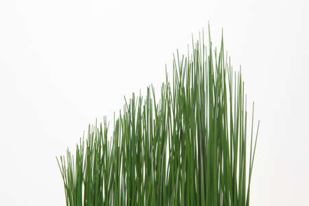 Grass on white background - Symbol for growth photo