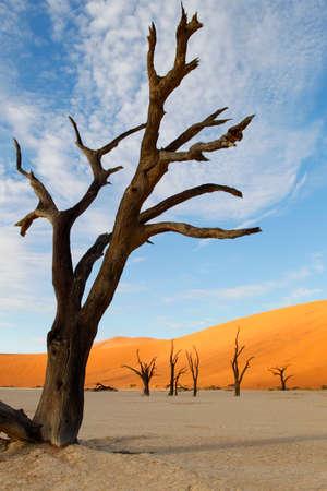 vlei: Dead Vlei, Sossusvlei, Namibia