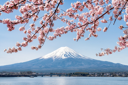 Mount Fuji with cherry blossom, Lake Kawaguchiko, Yamanashi Prefecture, Japan Stok Fotoğraf - 116323412