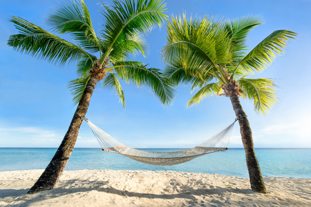 Palm trees with a hammock at a tropical beach