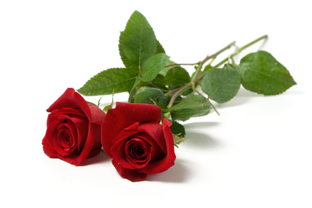 two red roses with small droplets on white surface photo