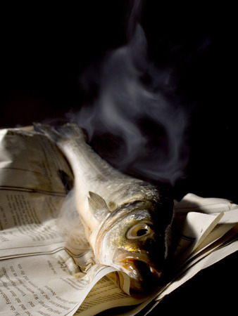 the stinking: rotting sea bass on a newspaper, smelling