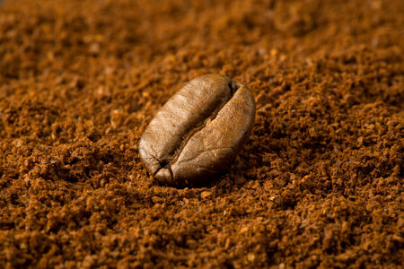 macro of single roasted coffee bean placed on grinded coffee Banco de Imagens