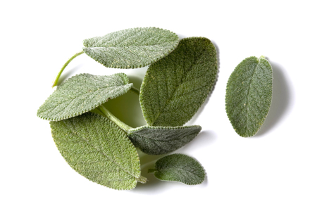white salvia: salvia leaves on white surface, one leaf separated Stock Photo