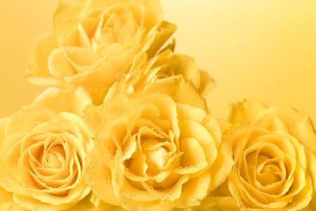 bunch of pastel yellow roses with droplets, light yellow background