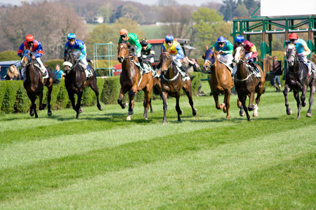 racehorses: horserace with 8 horses being started