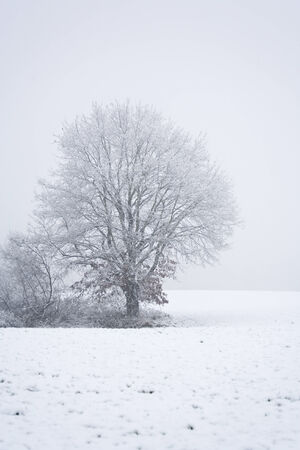 snowcovered: snowcovered tree on field