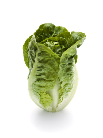 romaine lettuce standing isolated on white surface