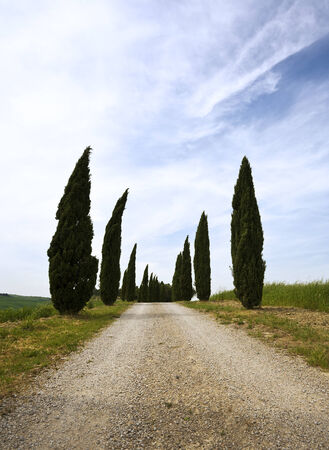 rural road seamed with cypress trees in the Tuscany photo