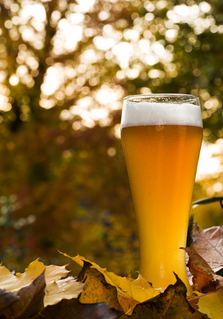 glass of unfiltered Hefeweizen beer surrounded by fall leaves, backlit