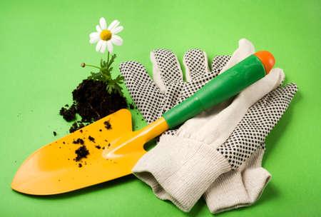 gardening gloves: gardeners shovel, gardening gloves and marguerite flower in soil on green background
