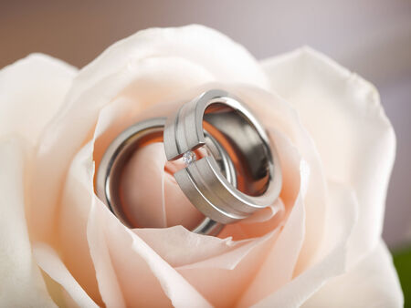 close-up of titanium, silver or platinum wedding or engagement rings inside a pink rose blossom photo