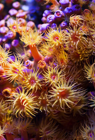 anemone flower: colony of sea anemones underwater Stock Photo