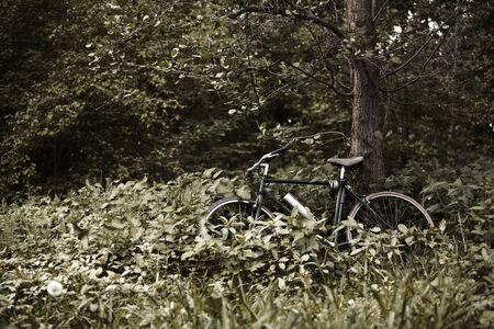 muted: bicycle leaning on tree in the shrubs, muted colors