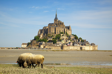 the mont st michel, grazing sheep in foreground