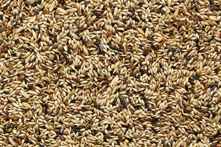 seeds of various: background of various seeds and grains