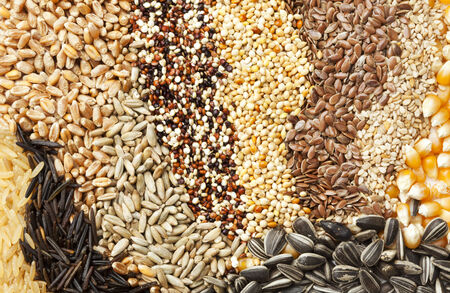 variety of grains and seeds photo