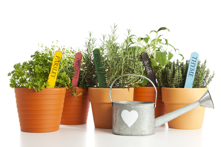 flower pot: Parsley, Oregano, Rosemary, Sage and Thame in flower pots with their names on wooden tags, watering can with heart shape in front, isolated on white