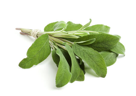string together: bunch of sage leaves tied together with a string