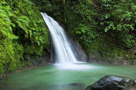 waterfall in forest: Waterfall in the National Park of Guadeloupe
