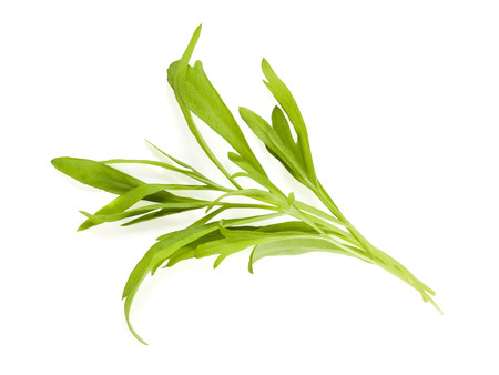 tarragon: bunch of tarragon leaves isolated on white background