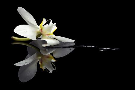 Flor de la orquídea en un charco en el fondo reflexivo negro Foto de archivo - 29457672